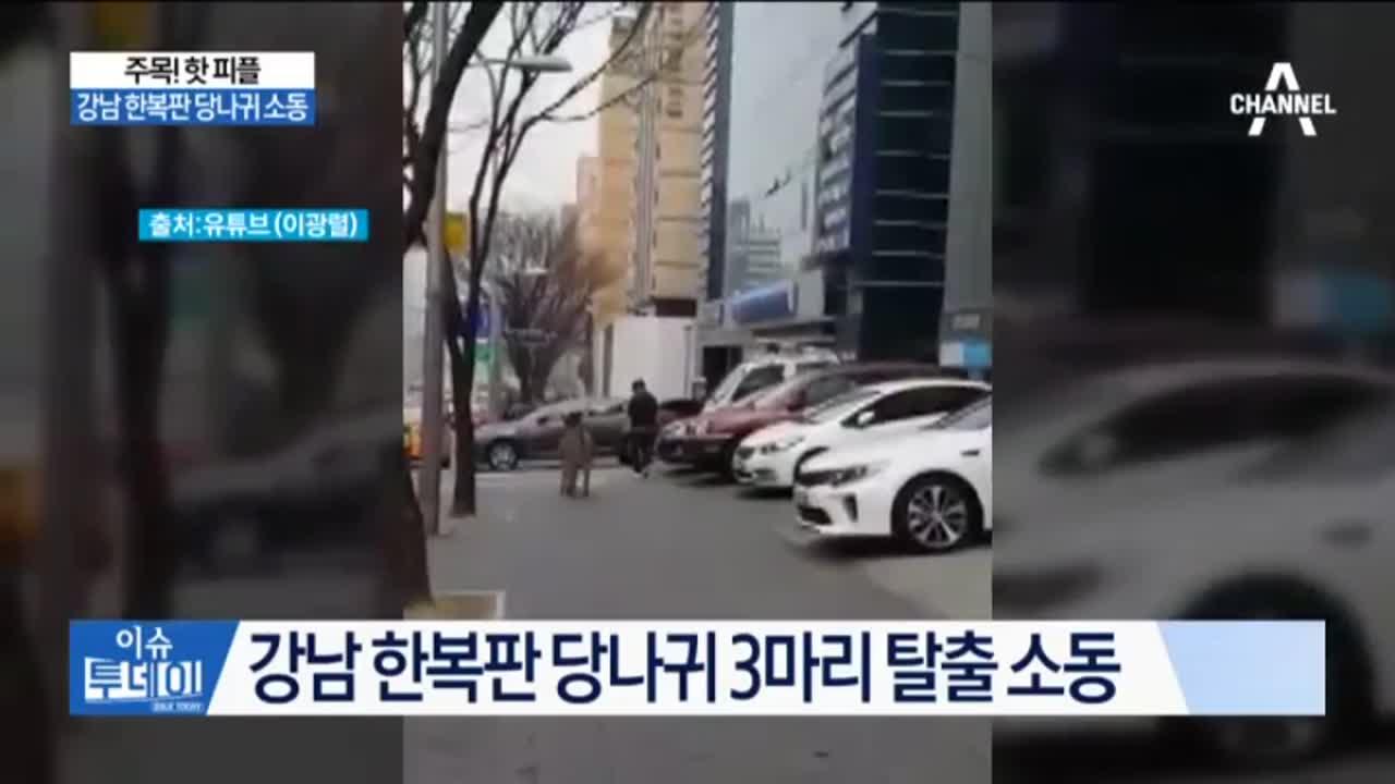 강남 한복판 당나귀 소동…가로수길 흔한 풍경?