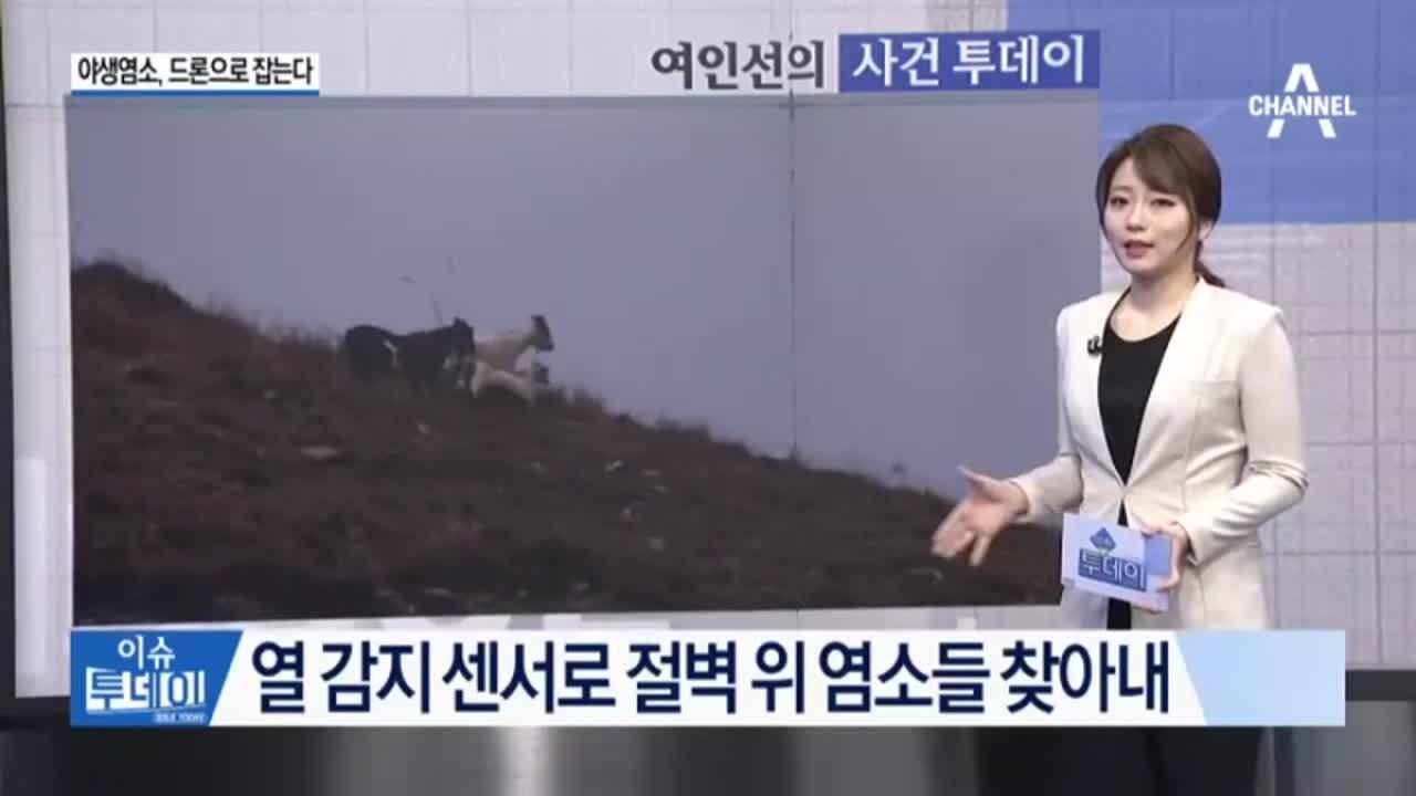 [사건투데이]야생염소, 드론으로 잡는다 外