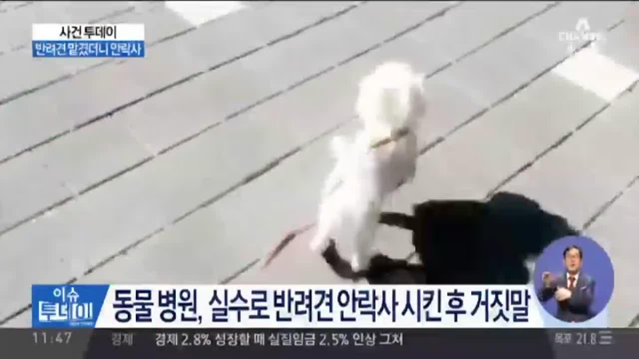 [사건투데이]동물 병원, 실수로 반려견 안락사 시킨 후....