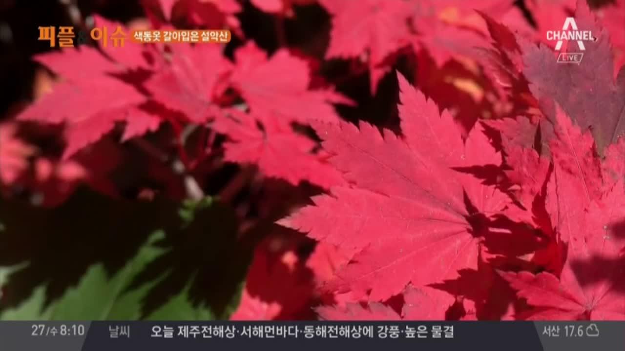색동옷 갈아입은 설악산! #가을 #단풍